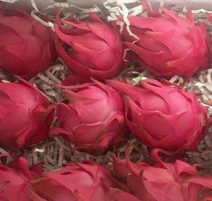 火龍果禮盒 10台斤(06~08顆裝)